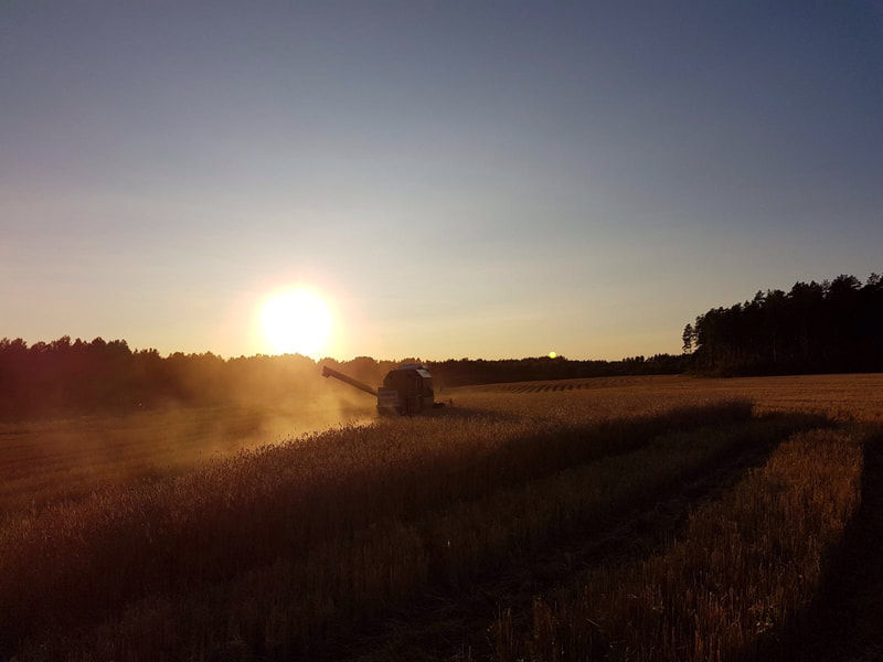 Torstila Organic Farm Harvest at sunset